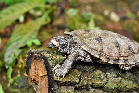 Озлобленная черепаха подожгла дом в Англии