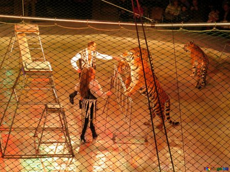 Отечественные цирки раскрываются для посетителей впоследствии длительного простоя