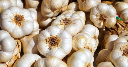 Россельхознадзор сообщил о росте импорта чеснока и имбиря в Россию