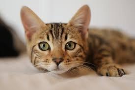 Ученые: кошки способны подражать людям