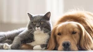 Ученые выяснили, что кошки умнее собак