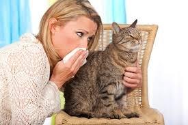 Ученые разработали вакцину от коронавируса для кошек