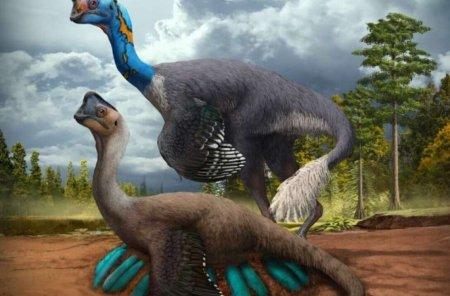 В Китае обнаружены окаменелости динозавра, сидящего на кладке яиц