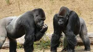 Ученые считают, что животные могут создавать свои традиции и культуру