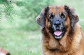 Ученые доказали способность собак ревновать
