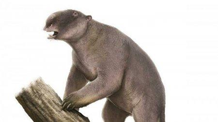 Ученые воссоздали ДНК медведя, сохранившуюся в почве